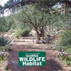 Keep Sedona Beautiful Speaker Series Presents Cliff Hamilton, Wildlife Biologist and Vice Mayor