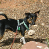 Dear Harley McGuire: Bad Human Behavior at Sedona Dog Park