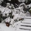 Arizona Major Winter Storm Arrives