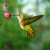Sedona Hummingbird Festival