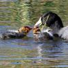 Birding the Sedona Wetlands Preserve