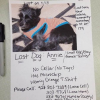 Help Find Lost Dog Annie Asks Harley McGuire