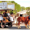60th Annual Fort Verde Days