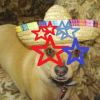 Poco Diablo McGuire: Fourth of July Pet Safety Tips