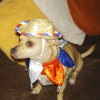 Poco Diablo McGuire: A Dog's Day Belated Fourth of July