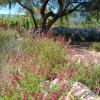 Conserve Arizona Water