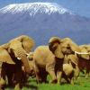 Leakey Presents African Safari Slide Show