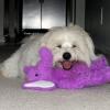 Eye on Sedona Animal Adoptions with Harley McGuire