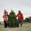 National Forest Christmas Tree Cutting Permits Available