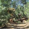 Weekend Storm Damage Extensive