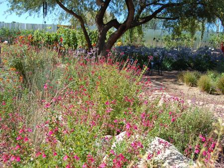 Arizona beautiful spring desert