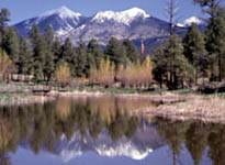 View of San Francisco Peaks in Flagstaff