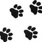 paw prints for harley mcguire column
