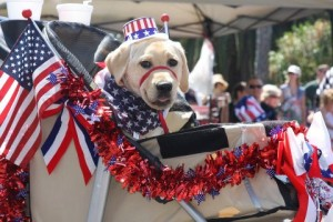 Happy Harley Mcguire fourth of july 4 dogs
