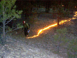 Forest prescribed burn method