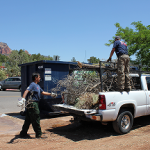 Sedona Fire District yard waste clean up