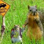 Squirrels School Bus Stop