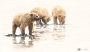 Lisa Langell Bear Trio
